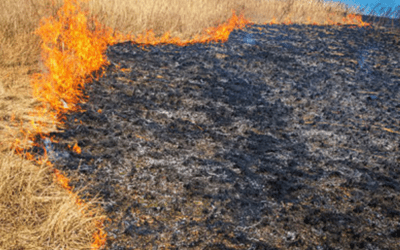 Veld fire affects electricity supply to pumping stations