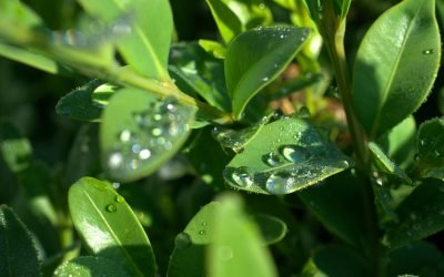 Spring Season – a reminder of level 1 water restrictions